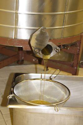 Nemocniční včely v Novém Jičíně nasbíraly téměř 50 kilogramů medu