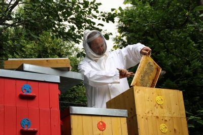 V Nemocnici Nový Jičín sklidili 30 kilogramů medu